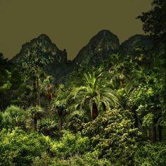 Olivia Lavergne - Jungles | LensCulture