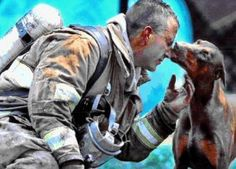 The dog is pregnant, the fireman had just saved her from an inferno in her house. The brave fireman rescued the dog by carrying her out of the house into her front yard, while he continued to fight the fire.     When he finally got done putting the fire out, he sat down to catch his breath and rest.  A photographer from the Charlotte, North Carolina newspaper, noticed her in the distance looking at the fireman.    He saw the dog walking straight toward the fireman and wondered what she was…