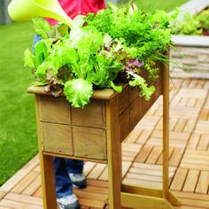 Great idea - build legs into a pre-made planter box http://www.sunset.com/garden/fruits-veggies/small-space-salad-box-00400000011785/