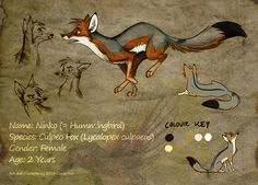 "Fox illustration, drawing / Volpe, illustrazione, disegno - Art by Culpeo-Fox on deviantART, ""Sheet Ninko"""