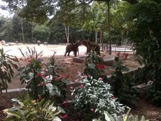 Elephants fighting (or dancing) at Mysore Zoo.