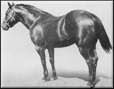 King P-234 is the stud at Casa Milagro- This was my great grand fathers horse!