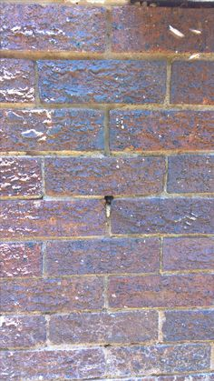 Bee removal in Johannesburg
