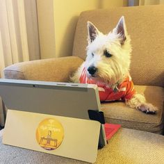 It is tough being a working blogging dog @wififamily without Internet access! #typeacon