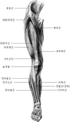 서울인체조형학원 - 인체해부드로잉 Leg Anatomy, Anatomy Bones, Anatomy Study, Anatomy Art, Anatomy Reference, Hand Reference, Pose Reference, Human Anatomy For Artists, Human Anatomy Drawing