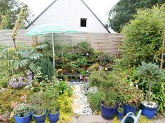 Mon jardin en Aout , j'ai du protéger les bonsaïs sous un parasol...j'en ai perdu 2 avec trop de soleil..