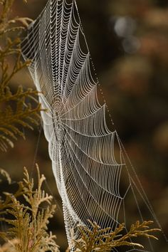 Extravagant architectural marvels found in the forest, during the season of spiders!