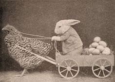 Egg Delivery - 'This is from a book that was published in 1937.' S)