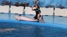 Espectáculo delfines Zoo de Barcelona - Julio de 2013 - @Santiago_Sanz_L - HD
