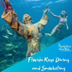 Discover wreck diving and snorkeling on North America's only living coral reef. Natural habitat for all species of tropical fish, sharks and barracuda. Miami State, Florida Keys Islands, Life Run, Vacation Memories, Tropical Fish, Low Key, Marine Life, Key West, Snorkeling