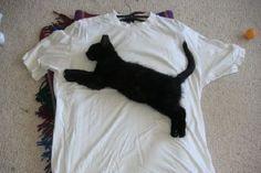 Diese 25 T-Shirts sind ein Muss für Katzenliebhaber - watson