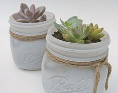 Succulents in White Mason Jar -Shabby Chic Vintage Country- Plant/Flower Gift, Wedding/Baby Shower Favors Centerpieces