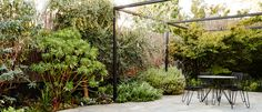 A modernist native garden in inner Melbourne.