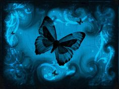 blue background butterfly