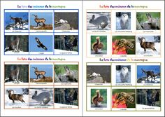 Vocabulaire animaux de la montagne Majestic Animals, Animals Beautiful, Animals And Pets, Funny Animals, Animal Mashups, Animal Photography, Animal Pictures, Skiing, Photo Wall