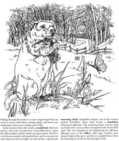 welcome to dover publications a walk in the woods coloring book much more than just