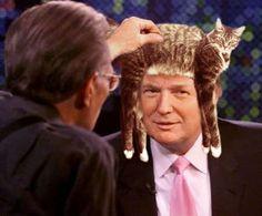 Yup, thats my cat Stevie Nixx on Donald Trump's head....