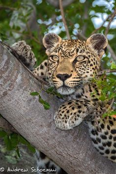 Lookout position by Andrew Schoeman - Photo 102638347 - 500px