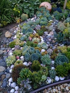 Suzi Nail Succulent garden design is a growing trend that is gaining popularity as more an., Succulent garden design is a growing trend that is gaining popularity as more an. Succulent garden design is a growing trend that is gaining popular. Succulent Landscaping, Succulent Gardening, Landscaping With Rocks, Front Yard Landscaping, Succulents Garden, Planting Flowers, Landscaping Ideas, Succulent Rock Garden, Rockery Garden