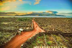 Açores: Vinhas da Ilha do Pico com a ilha do Faial no Horizonte  By Pedro Vaz de Carvalho - Photography