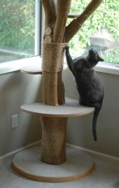 Cat tree made out of a real tree http://www.catsyards.com/product-category/beds-furniture/activity-trees/