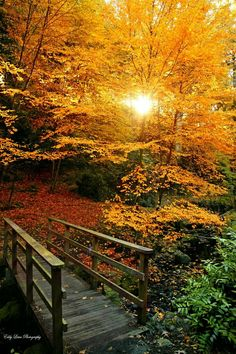 Fall Pictures, Fall Photos, Nature Photos, Beautiful World, Beautiful Places, Autumn Walks, Autumn Scenes, All Nature, Amazing Nature