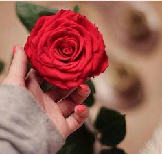 Hand Flowers, Holding Flowers, Rose Flowers, Romantic Roses, Beautiful Roses, Flower Wallpaper, Cool Wallpaper, Flower Girl Photos, Love You Gif
