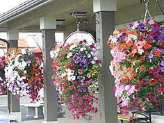 OHHHHH! Thats how they do it! GREAT directions for making your own hanging planter. #containergardeningideashangingbaskets #containergardeningideasporch
