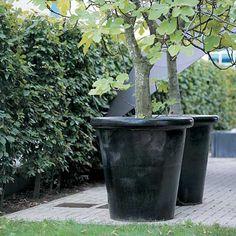 Geen beplanting in potten ivm frequent watergeven.