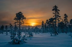 Sunrise in Lapland by raunokalda Finland Family Tree For Kids, Dawn And Dusk, Evergreen Trees, Snowy Day, Great Places, Winter Wonderland, Nature Photography, Homeland, Spaces
