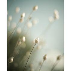 blau grün Sommer Natur Fotografie / kühlen Tönen von shannonpix, $28.00