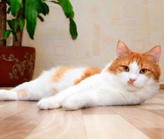 This is a great time in your cat's life. Learn what you need to know about caring for and training your adult 3- to 4-year-old cat including exercise needs and more.