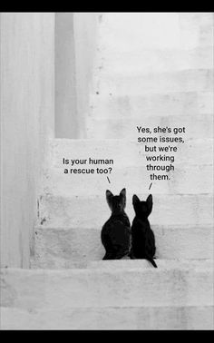 Adoption Issues - World's largest collection of cat memes and other animals Cute Funny Animals, Cute Baby Animals, Animals And Pets, Cute Cats, Funny Cats, Crazy Cat Lady, Crazy Cats, Beautiful Cats, Animals Beautiful