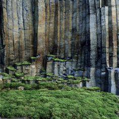 nils-udo, sans titre, auvergne, 2000, colonnes de basalte, mousse - nils udo, basalt columns and moss