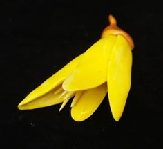 Image result for kowhai flower art Flower Art, Flowers, Image, Art Floral, Royal Icing Flowers, Flower, Florals, Floral, Blossoms