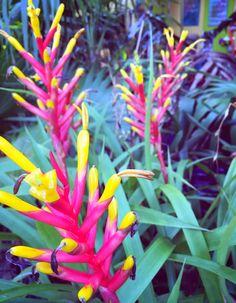 more beautiful tropical flowers from Islamorada, Florida Keys