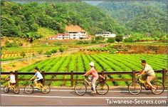 Pinglin Tea Town