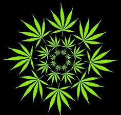 Cannabis and Culture Get your weed and munchies I thought I would lighten things up and enjoy the culture that is a large part of my life. I thought I'd talk about Cannabis, But first enjoy some cool Bong Pictures Was that as good for you as it was for. Marijuana Leaves, Medical Marijuana, Cannabis Oil, Weed Wallpaper, Cannabis Wallpaper, Wallpaper App, Phone Wallpapers, Weed, Dope Wallpapers