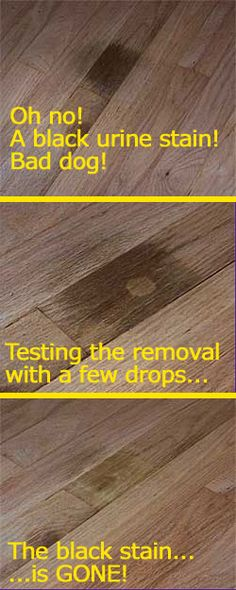 to remove the urine smell from your hardwood floor, use enzyme