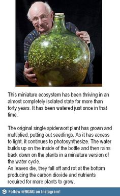 Garden in a bottle, anyone?
