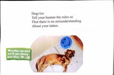 Doxie wants to be worshiped! The Pet Postcard Project