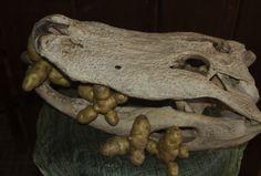 Gator Jack loving the Ozette taters