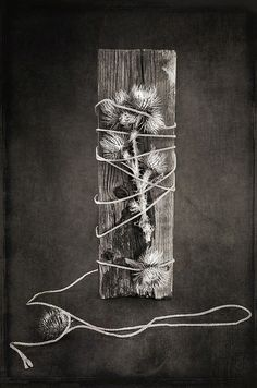 Tied Thistles   Flickr - Photo Sharing!