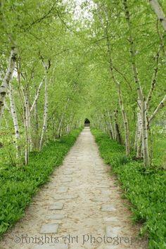 Walking through green--as far as the eye can see