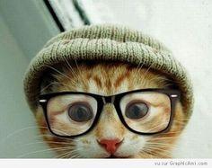 """Portrait en gros plan d'un chat couleur caramel, avec des lunettes et un bonnet, un chat """"Mode"""" et """"New Look"""" pour l'hiver !"""
