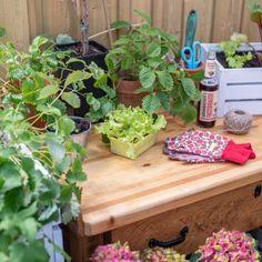 DIY - Gartendeko: Mondscheinkugeln (glow in the dark) - Leelah Loves Diy Upcycling, Table, Plants, Furniture, Home Decor, Holiday Tomorrow, Concrete Paving Slabs, Natural Colors