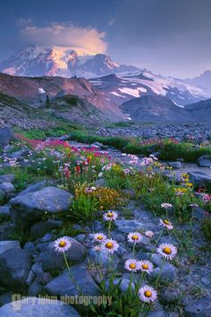 6febd856a11cc29cafd1f916e9ec53c3--mount-rainier-wild-flowers.jpg (533×800)