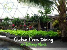If you are Gluten Free, make sure you check out this pin about Gluten Free dining at Walt Disney World.