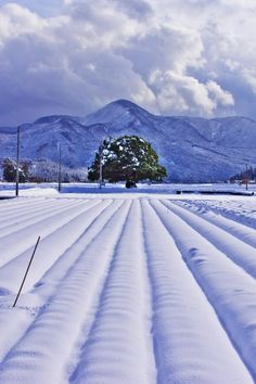 Daisen, Tottori, Japan 大山 鳥取 Winter In Japan, Shimane, Tottori, Sea Of Japan, Japan Travel, Travel Trip, Weather Seasons, The Beautiful Country, Winter Wonder