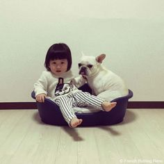 新しいベット #frenchbulldog #frenchie #dog #daughter #フレンチブルドッグ #女の子